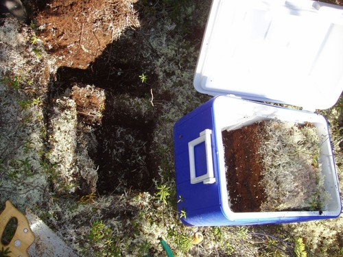 Soil sample below lichen cover